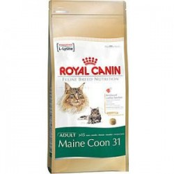 Royal Canin Maine Coon 31 10kg